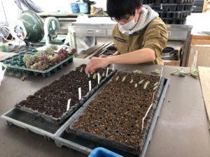 複数種の培養土で試験を行います