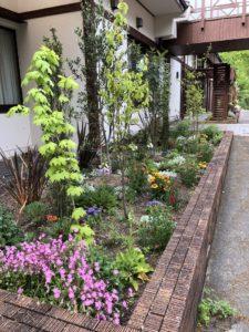 花壇の植物も綺麗に咲いています