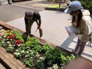 先週植栽したばかりの花壇管理の説明をする先輩