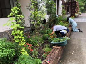 研修棟前花壇