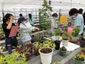 温室の管理方法の指導