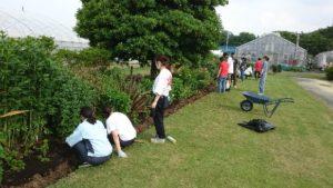 芝生と植栽地の間の溝に注目