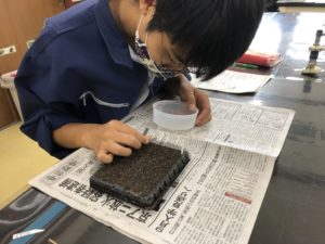 マイクロ寄せ植えは小さいセルにまきます