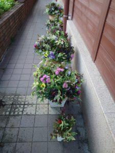 日陰で管理されている寄せ植え6鉢