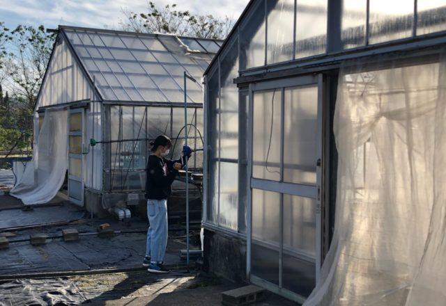 温室の側窓解放