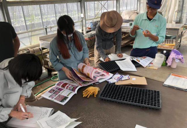 種の播き方を種苗会社のカタログで調べています