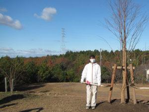 シンボルツリーのカツラの植樹祭