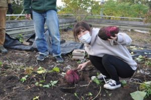 サツマイモ掘りの園芸福祉プログラム