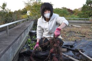 サツマイモ掘りはイモが小さくても大きくても笑顔になる