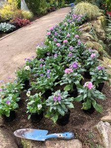 園路沿い花壇へ植栽
