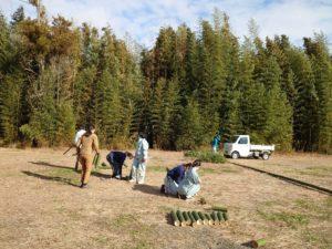 竹やぶから竹を収穫している学生ら