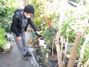 温室内の潅水の様子②