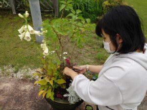 寄せ植えをメンテナンスする学生