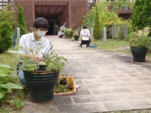 寄せ植えを植え替える学生ら