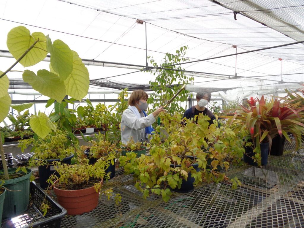植物管理当番
