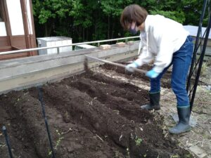 屋上緑化実習園で畝だてに挑戦
