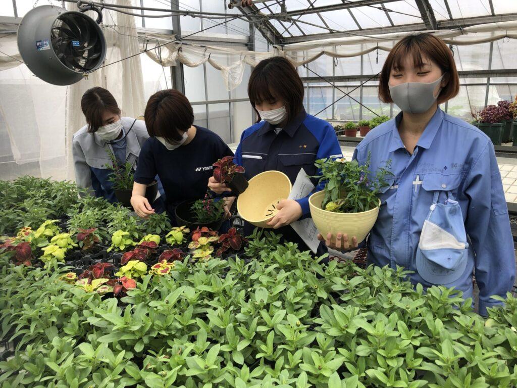 温室で花材選び