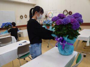 アジサイの鉢をラッピングする学生ら