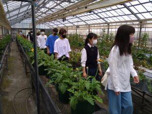 温室を見学する参加者